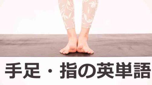 手足・指の英単語